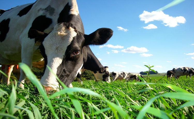 consumo de carne e aquecimento global